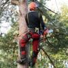 Elms Field – Tree Works