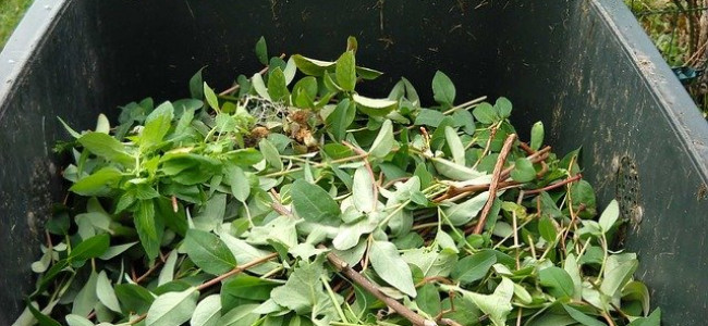Time to Renew Garden Waste Collection Service