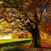 Tree Preservation Orders & Tree Protection Orders (TPO) Made Easy In Wokingham