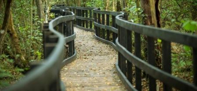 California Country Park Boardwalk Opened