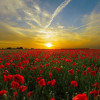 Wokingham Remembers This Weekend – Remembrance Sunday