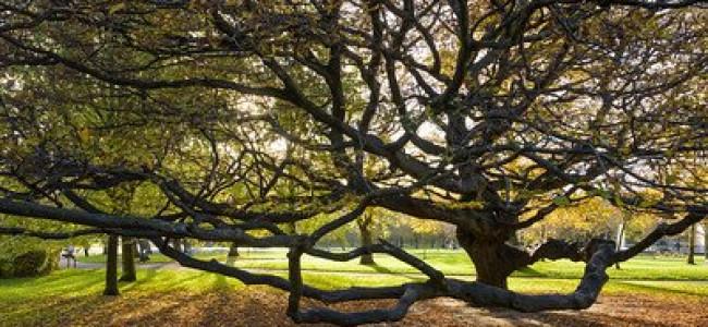 Woodland Trust £300,000 Cash Boost For Wokingham Tree Planting